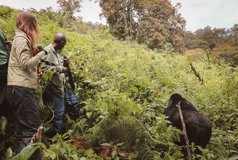 Gorilla Trekking Parc National des Volcans