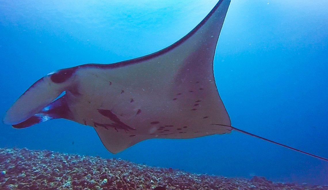 Diving in Komodo Island on board of Alexa